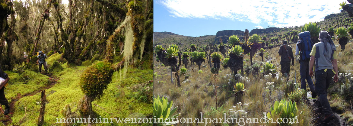 hiking-and-nature-walks-mt-rwenzori